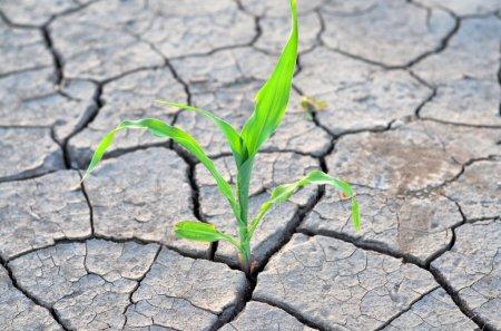 Regatec oferece soluções para economia de água durante estiagem