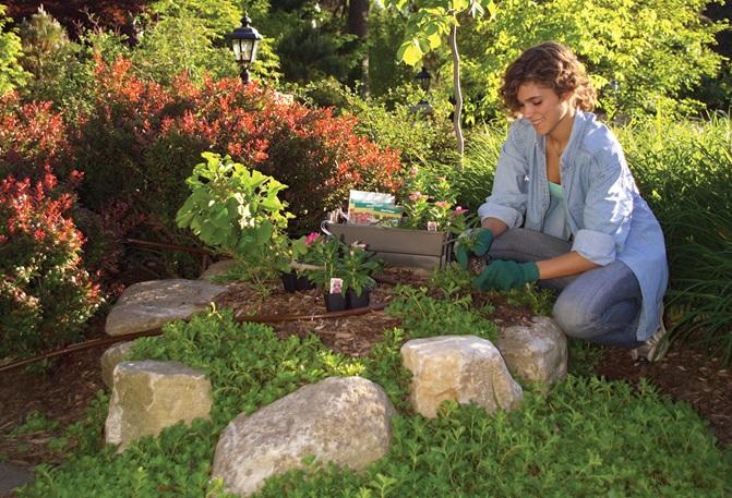 Regatec lança sistema autônomo de irrigação para pequenos jardins
